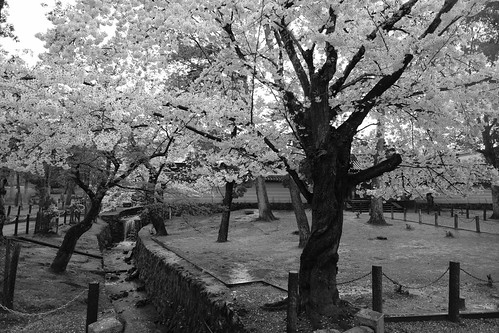 01-04-2020 Nara vol01 (54)