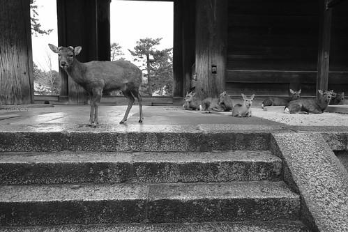 01-04-2020 Nara vol01 (50)