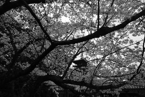 01-04-2020 Nara vol01 (22)