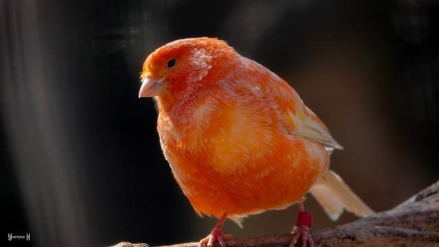 Bird - 8245