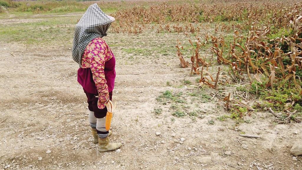 20200401 台南鉻玉米田