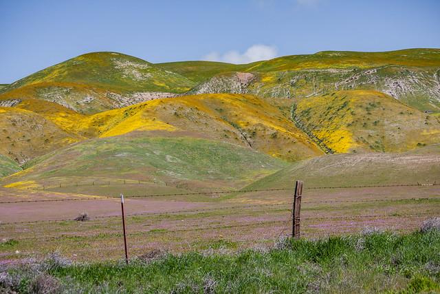 Carrizo Plain 2010 51