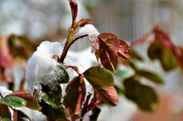 La neve di Aprile