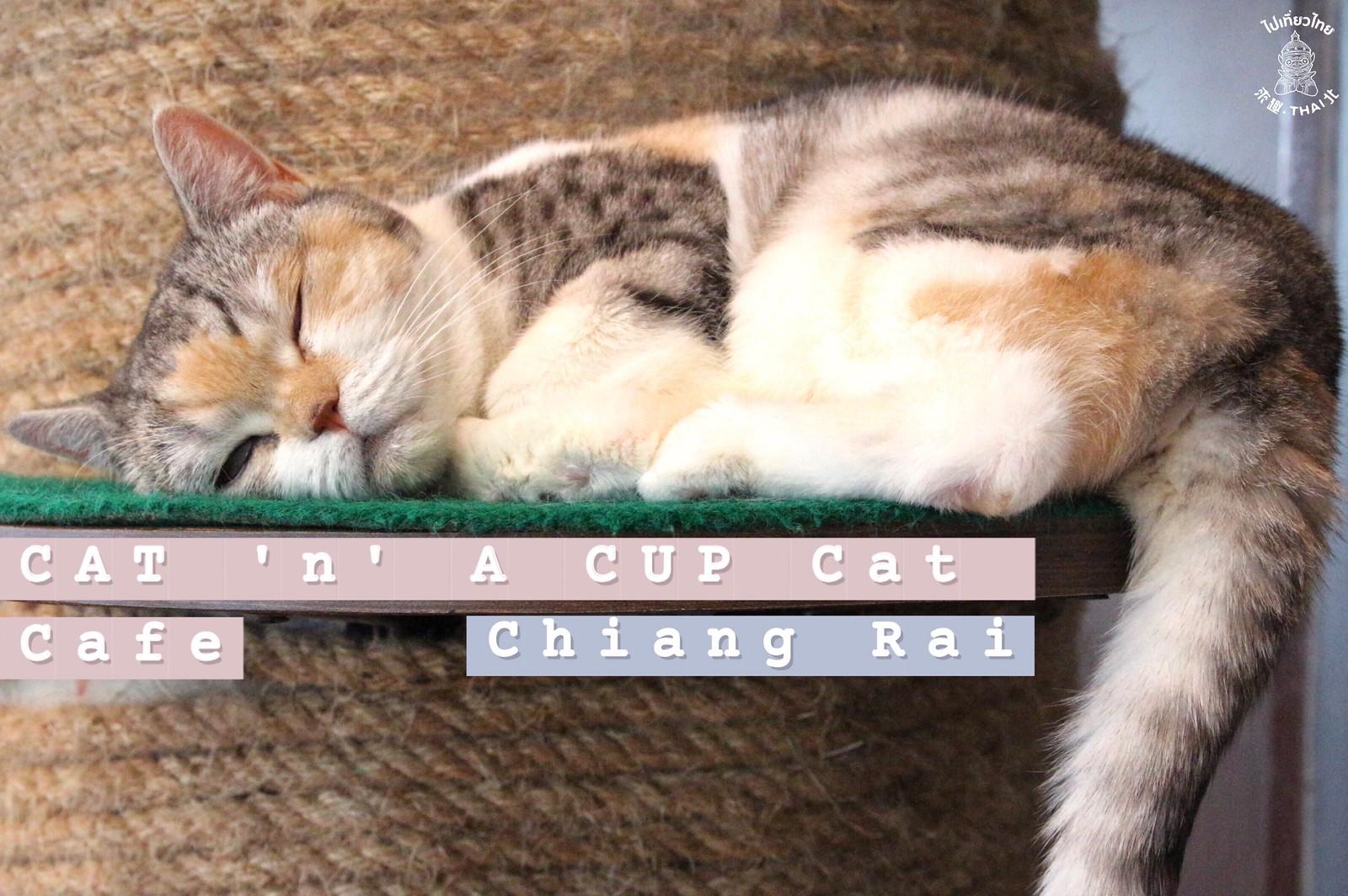 最可愛的貓貓咖啡廳《CAT 'n' A CUP Cat Cafe》