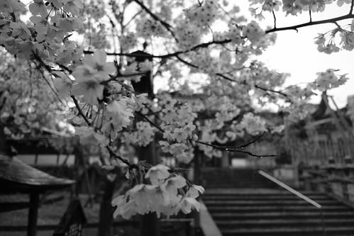 01-04-2020 Nara vol01 (63)