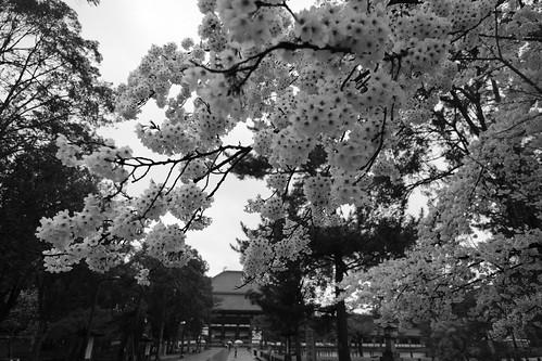 01-04-2020 Nara vol01 (53)