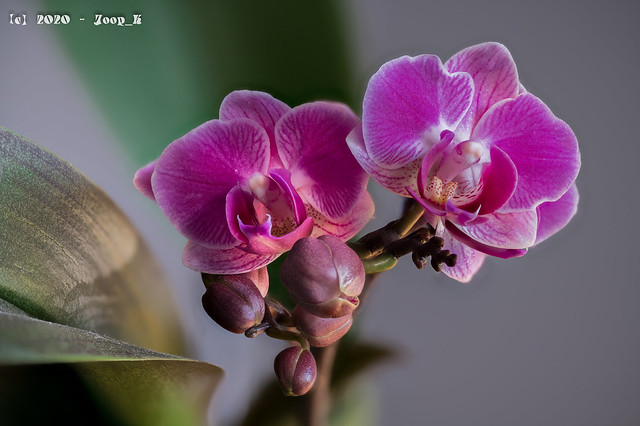 Orchidstack75pics