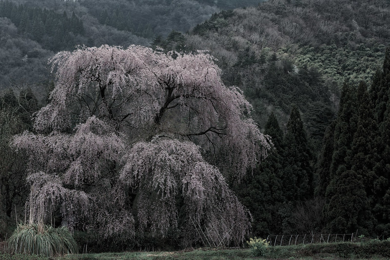 an old tree with no name