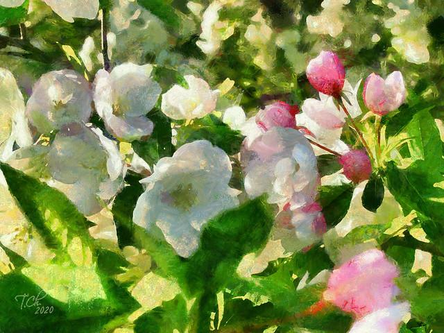 Бело-розовый сад / Jardin blanc-rose / White-pink garden