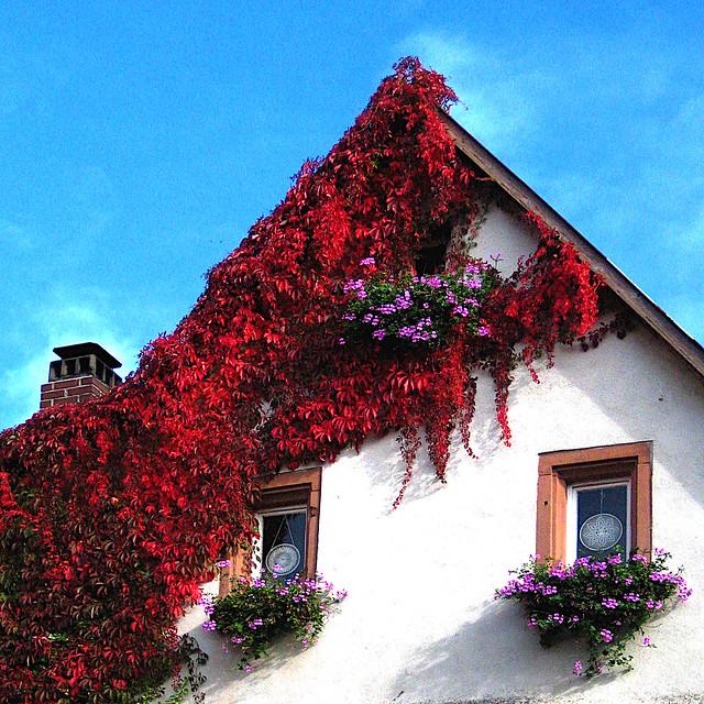 The Vine House