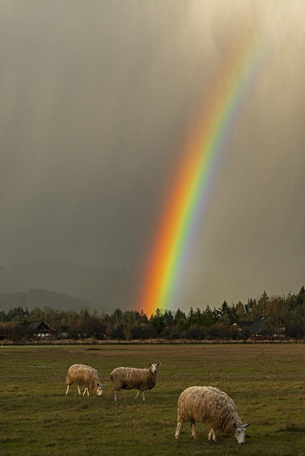 There's Sheep at the end of the Rainbow