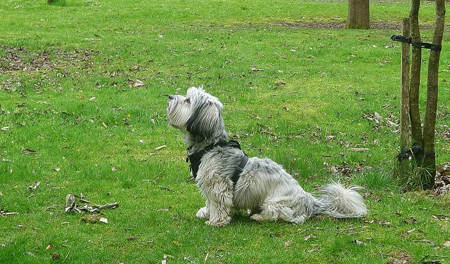 Alfie stares up at a squirrel