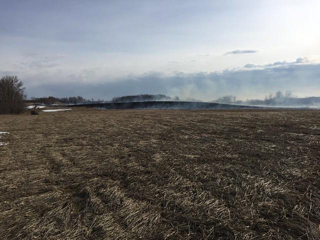 Hopefully saving new alfalfa crop.... March 31, 2020