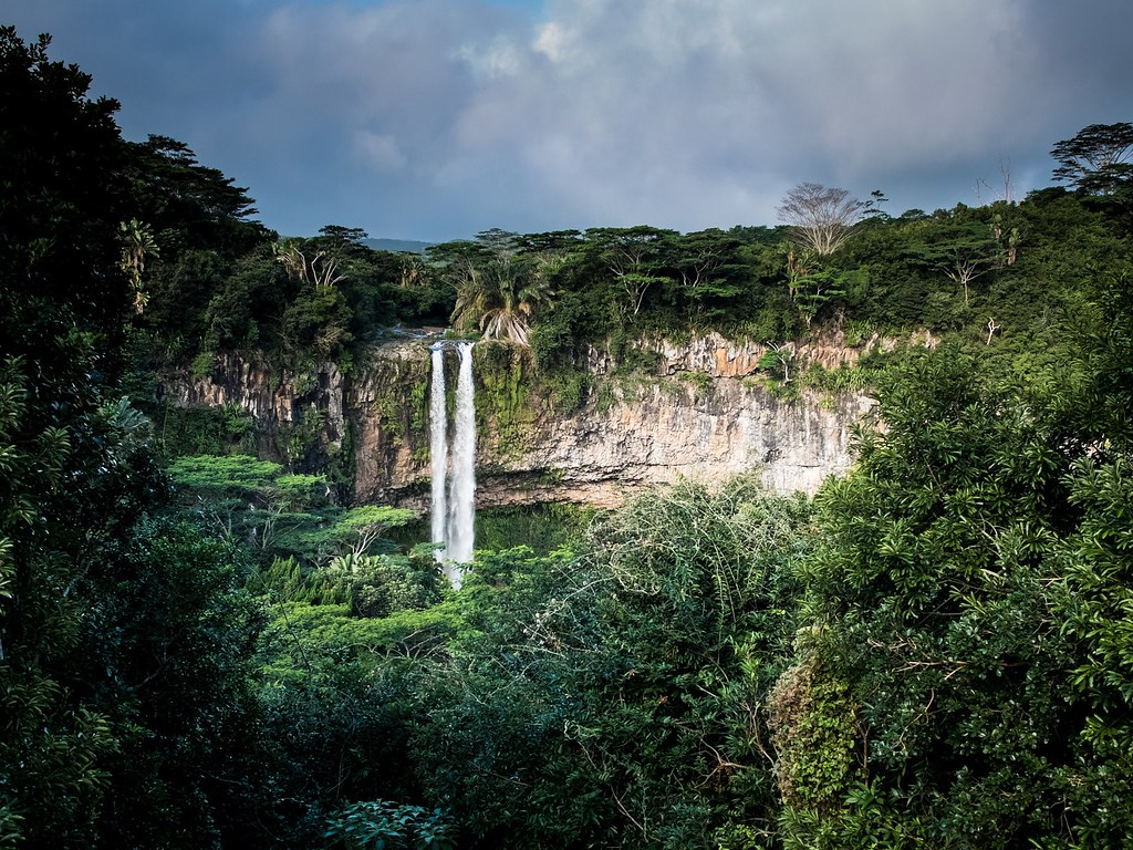 We Need Our Tropical Forests More Than Ever