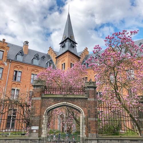 Magnolia-pracht in Leuven (21/03/2020-