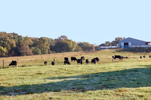 Story_Map_UDCANR_Angus_Cattle_Webb_Farm