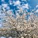 Springtime, Myersville, Maryland, April 2020