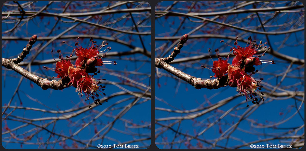 Buds & Blossoms 5 (Stereo)