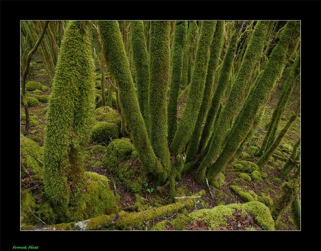 Mousse sur les arbres au dessus de la Loue - Rurey