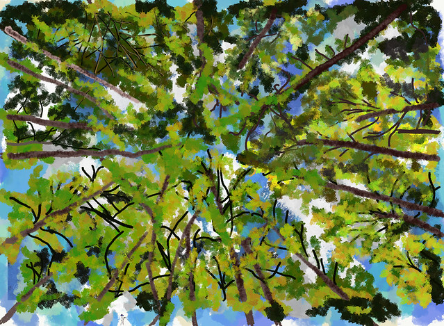 My Travel Paintings - Congaree National Park Under Tall Trees