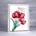 splendiferous blush red tulips