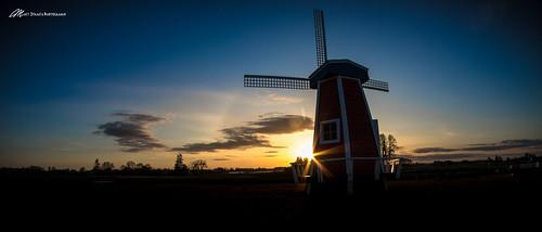 sunset sun sunburst windmill tulip oregon flower landscape