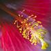 Beautiful flower 🌸