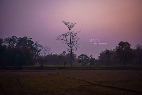 morning rice paddy pink green spring life landscape photography village india nikon 35mm tree trees nature