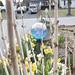 I took this photo through my still budding Hydrangea of my driveway garden.