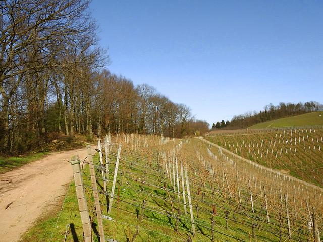 Entre Appenweier à gauche du chemin et Durbach à droite