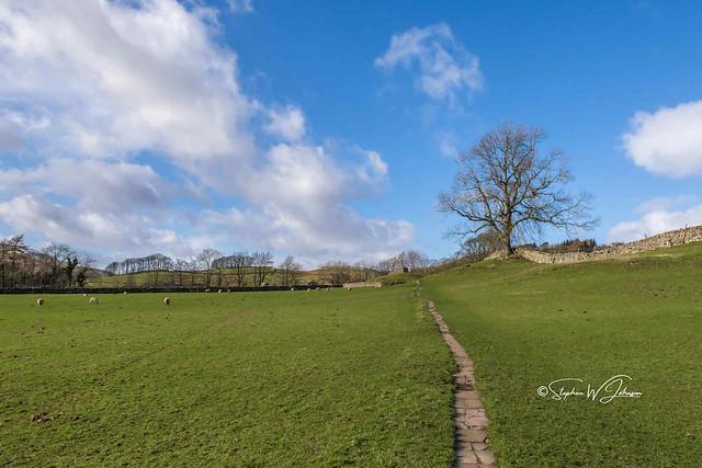 SJ2_1271 - Meadows of Hardraw