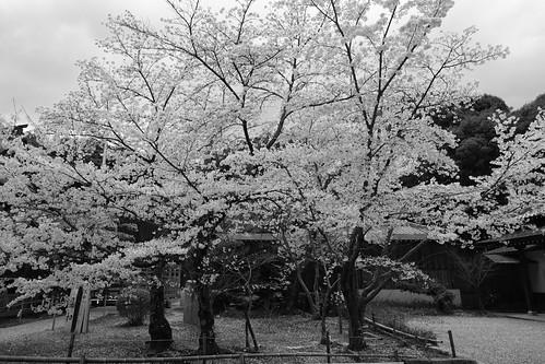 02-04-2020 Nara pref. Tatsuta-Taisya Shrine (10)