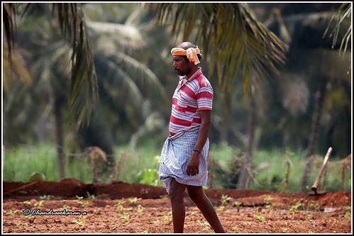 farmer tiruchengode india tamilnadu farm canoneos6dmarkii tamronsp150600mmg2