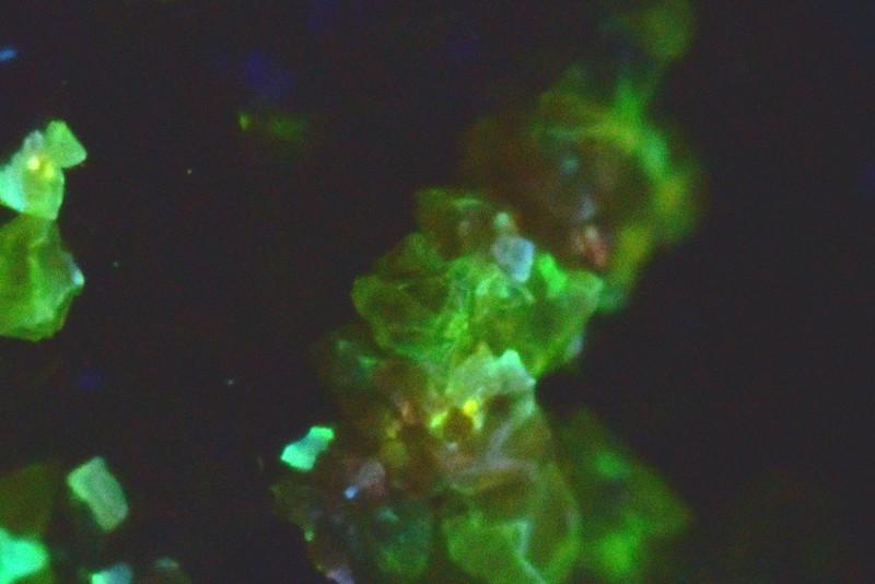閃亜鉛鉱 / Sphalerite (短波紫外線照射)