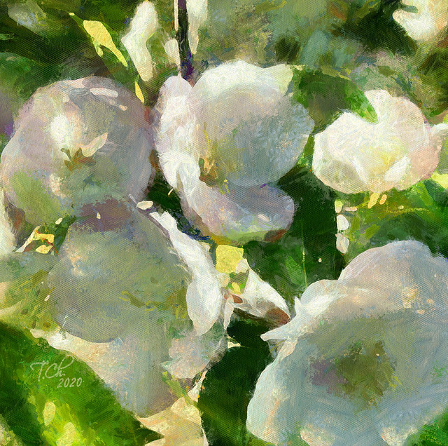 Бело-розовый сад.деталь / Jardin blanc-rose.détail / White-pink garden.detail