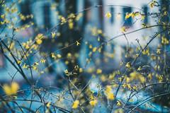 Yellow | Spring 2020 | Kaunas