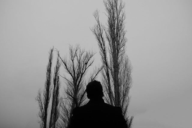 Tree and People
