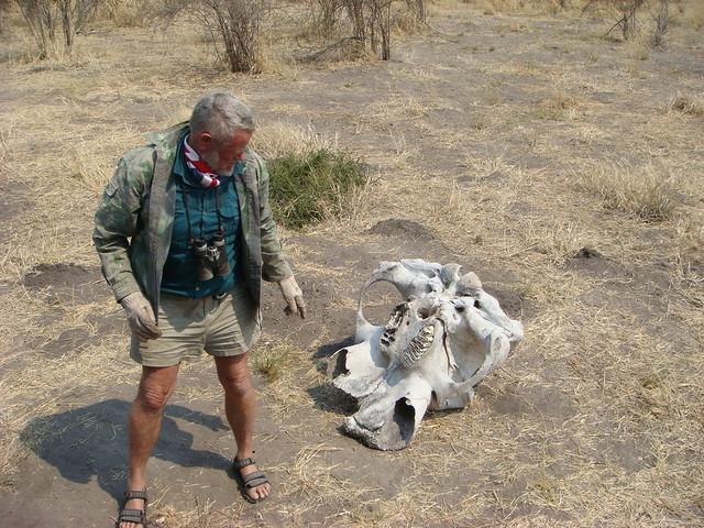 Nick-ossa-elefante