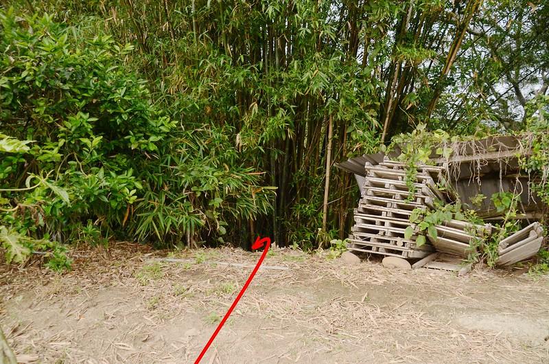 上高埔竹林切入口