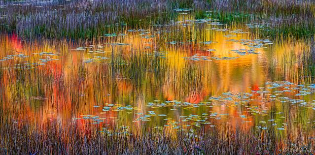 Acadia Color