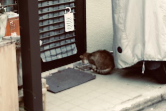 Today's Cat@2020ー03ー31