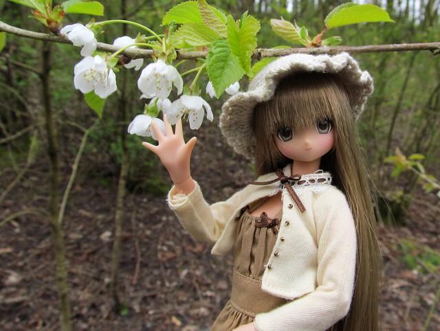 Kaba-chan & Wild Cherry