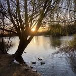 Watermead Sunset