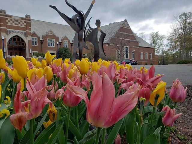 Tulips 2020