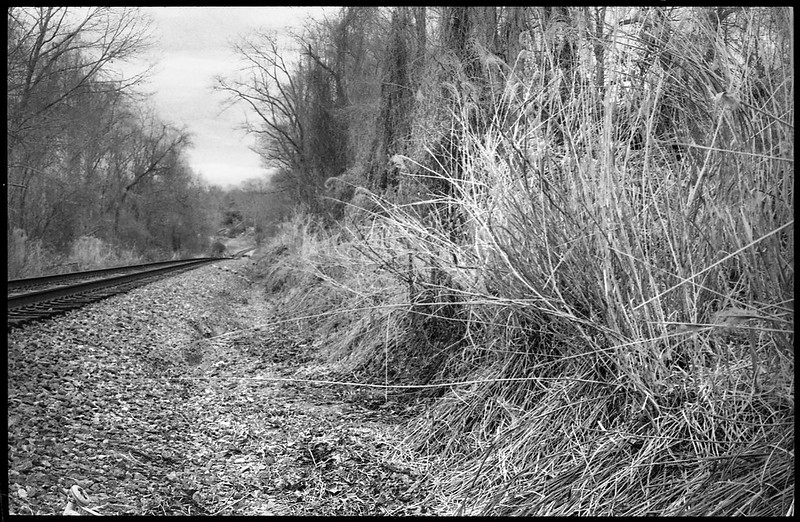 tall wild grasses, dried kudzu-covered trees, receding train track, Asheville, NC, Minolta XG-M, Super Albinon 28mm f-2.8, Bergger Bancro 400, HC-110 developer, mid March 2020