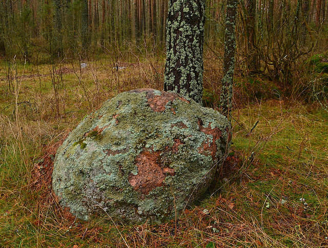 Granite covered by moss