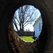 Peeking Through the Knothole