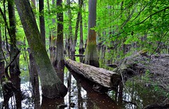 A Great American Trip Through Congaree National Park