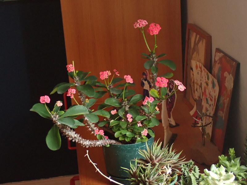 Les succulentes chez Cloo en 2020 - Page 6 49728779577_dd5f04d3e3_c