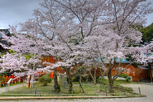02-04-2020 Nara pref. Tatsuta-Taisya Shrine (3)